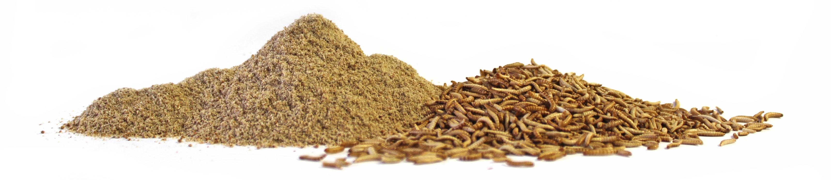 insekten mehl online kaufen insektenmehl insekten protein shop. Black Bedroom Furniture Sets. Home Design Ideas