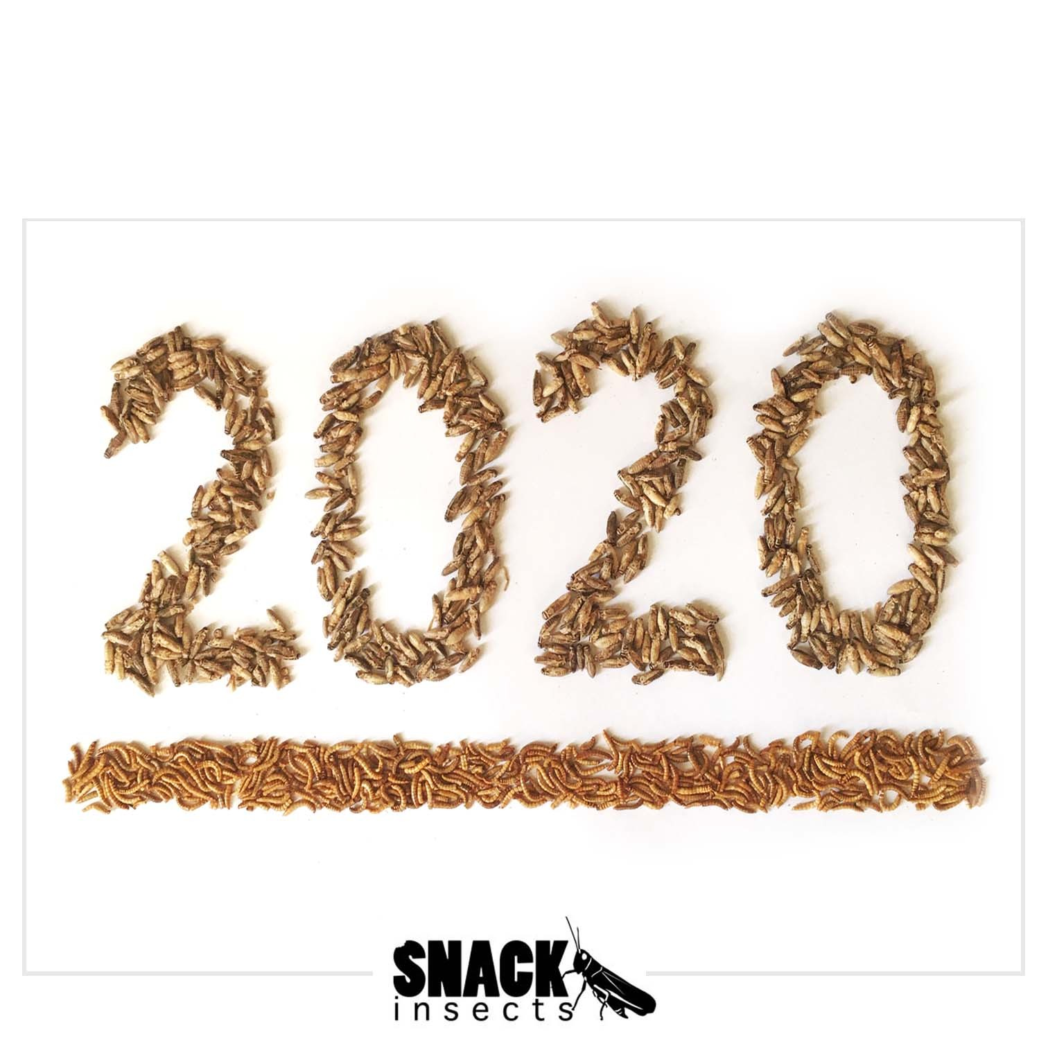 2020_Snack-Insects