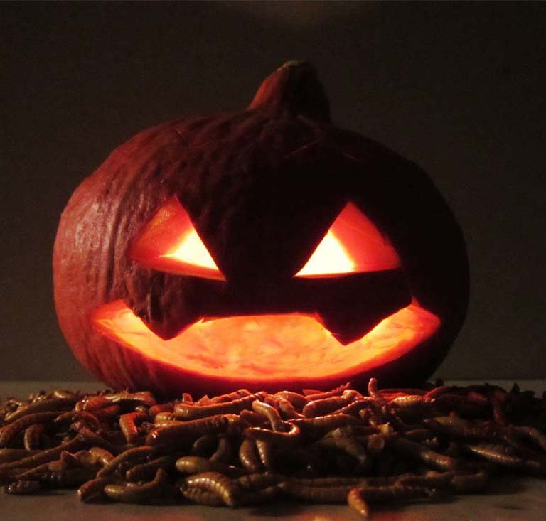 Insekten_essen_zu_Halloween_-_Insekten_Snacks_von_Snack-Insects