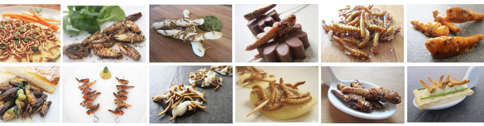 INSEKTEN_REZEPT_VARIATIONEN_SNACK-INSECTS_ESSBARE_INSEKTEN_ESSEN