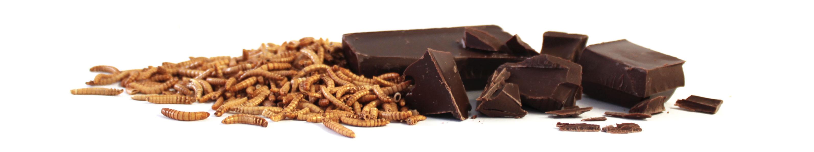 Insekten_in_Schokolade_INsektenschokolade_von_Snack-Insects_kaufen